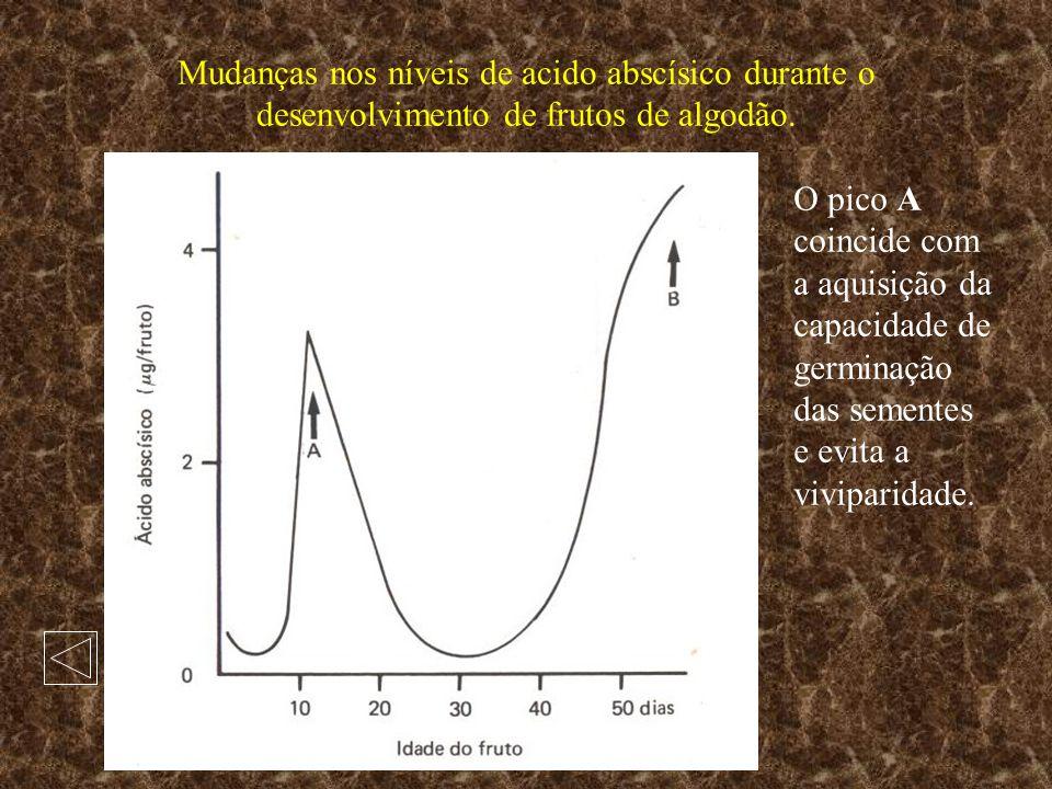 Mudanças nos níveis de acido abscísico durante o desenvolvimento de frutos de algodão. O pico A coincide com a aquisição da capacidade de germinação d