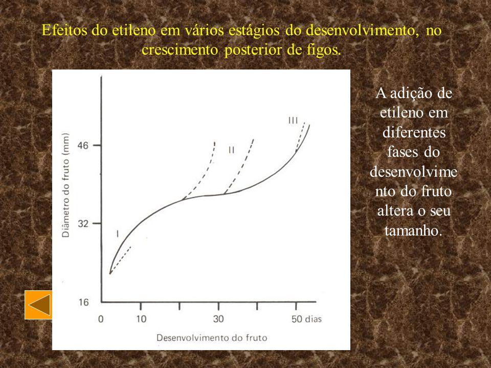 Efeitos do etileno em vários estágios do desenvolvimento, no crescimento posterior de figos. A adição de etileno em diferentes fases do desenvolvime n