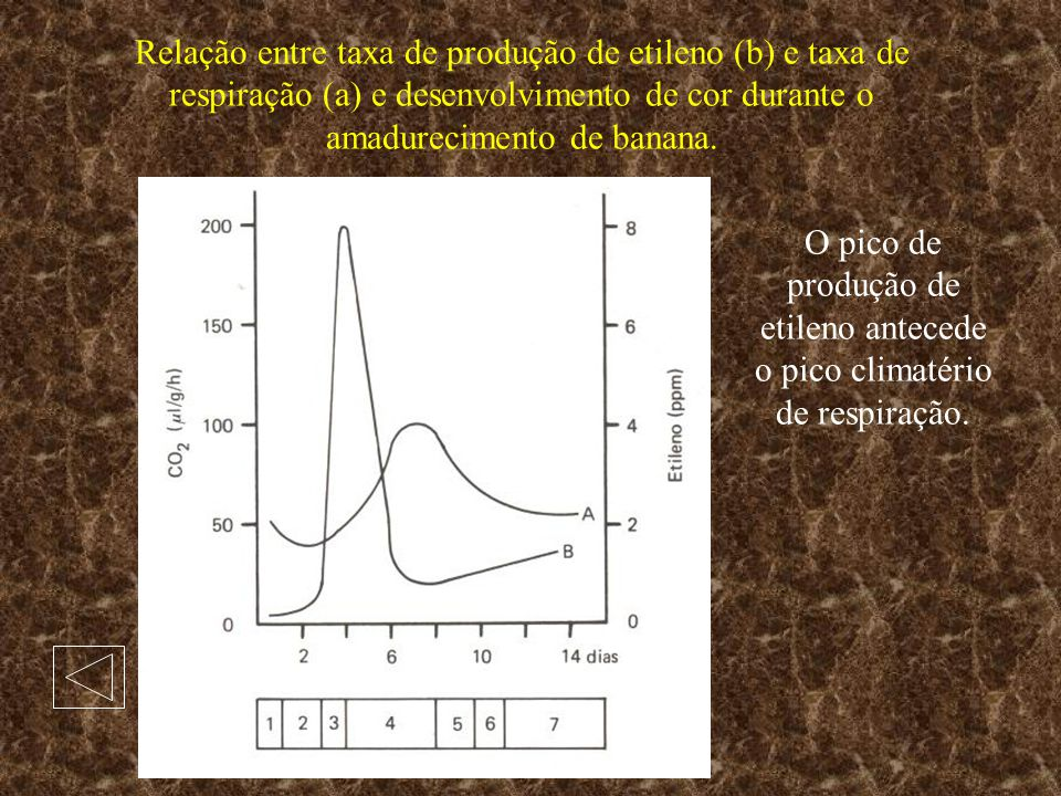 Relação entre taxa de produção de etileno (b) e taxa de respiração (a) e desenvolvimento de cor durante o amadurecimento de banana. O pico de produção