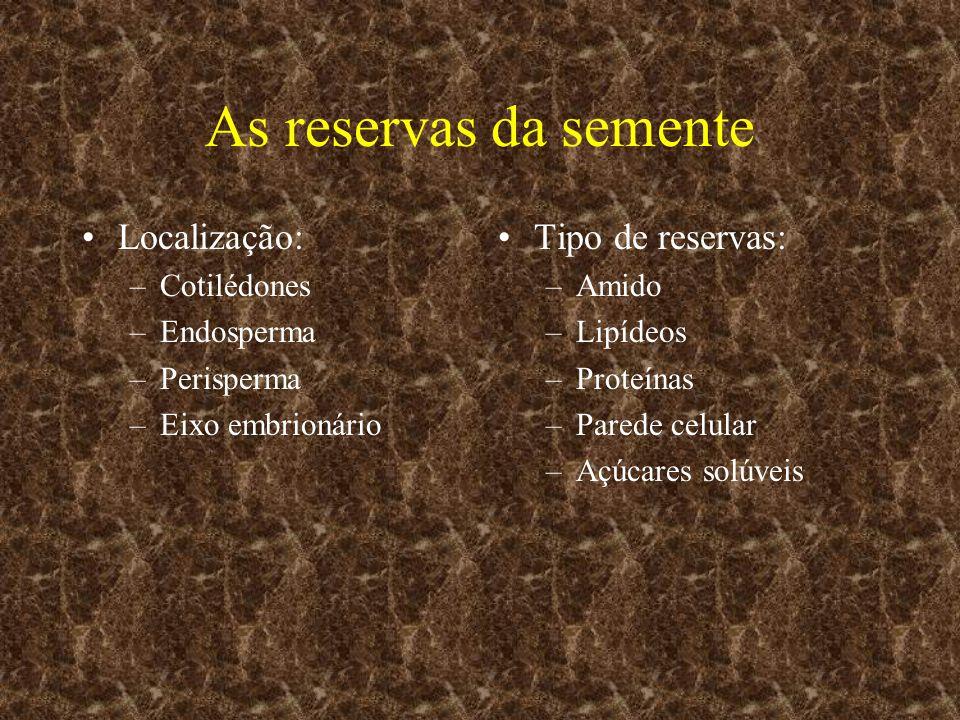As reservas da semente Localização: –Cotilédones –Endosperma –Perisperma –Eixo embrionário Tipo de reservas: –Amido –Lipídeos –Proteínas –Parede celul