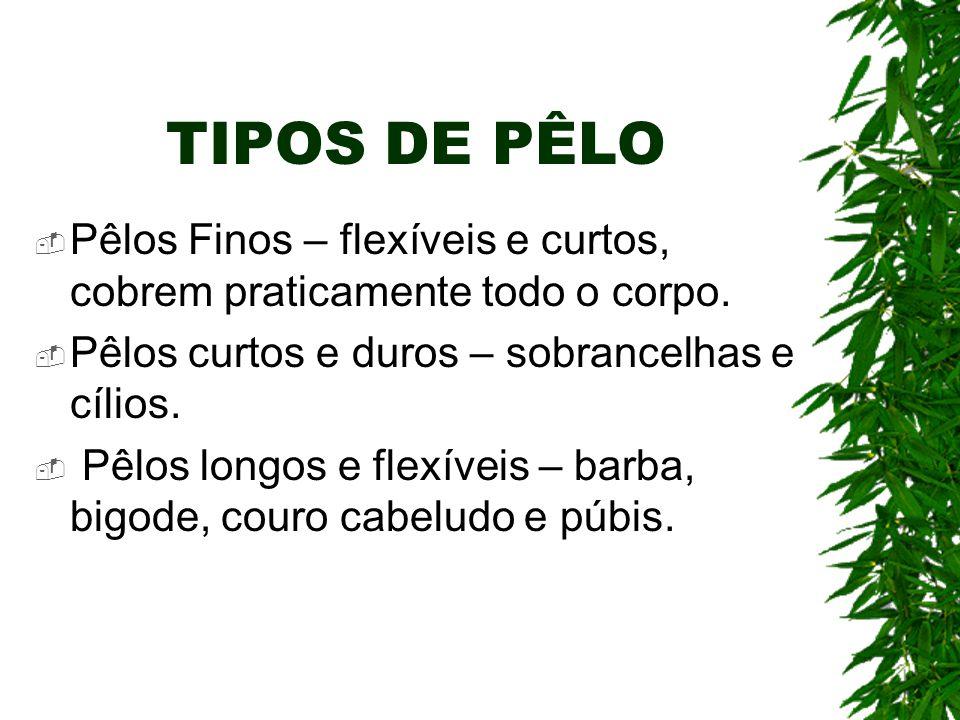 TIPOS DE PÊLO Pêlos Finos – flexíveis e curtos, cobrem praticamente todo o corpo. Pêlos curtos e duros – sobrancelhas e cílios. Pêlos longos e flexíve