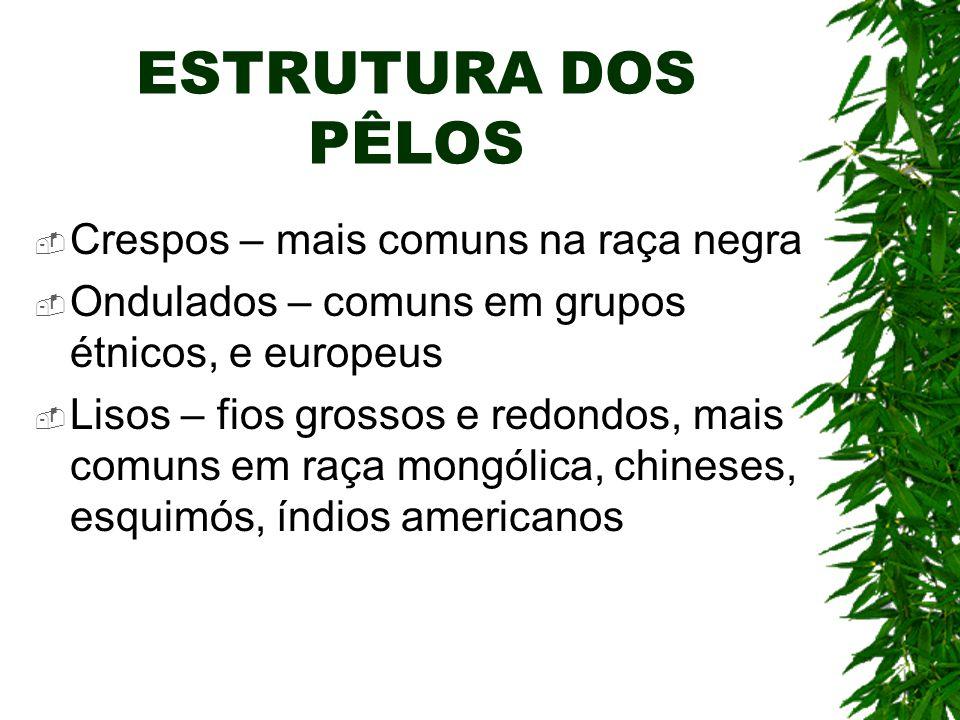 ESTRUTURA DOS PÊLOS Crespos – mais comuns na raça negra Ondulados – comuns em grupos étnicos, e europeus Lisos – fios grossos e redondos, mais comuns