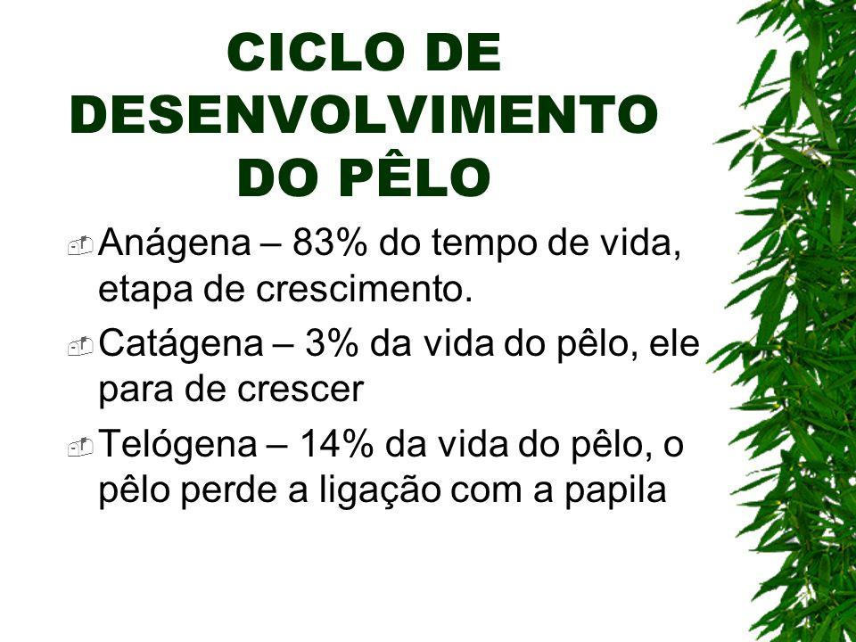CICLO DE DESENVOLVIMENTO DO PÊLO Anágena – 83% do tempo de vida, etapa de crescimento. Catágena – 3% da vida do pêlo, ele para de crescer Telógena – 1