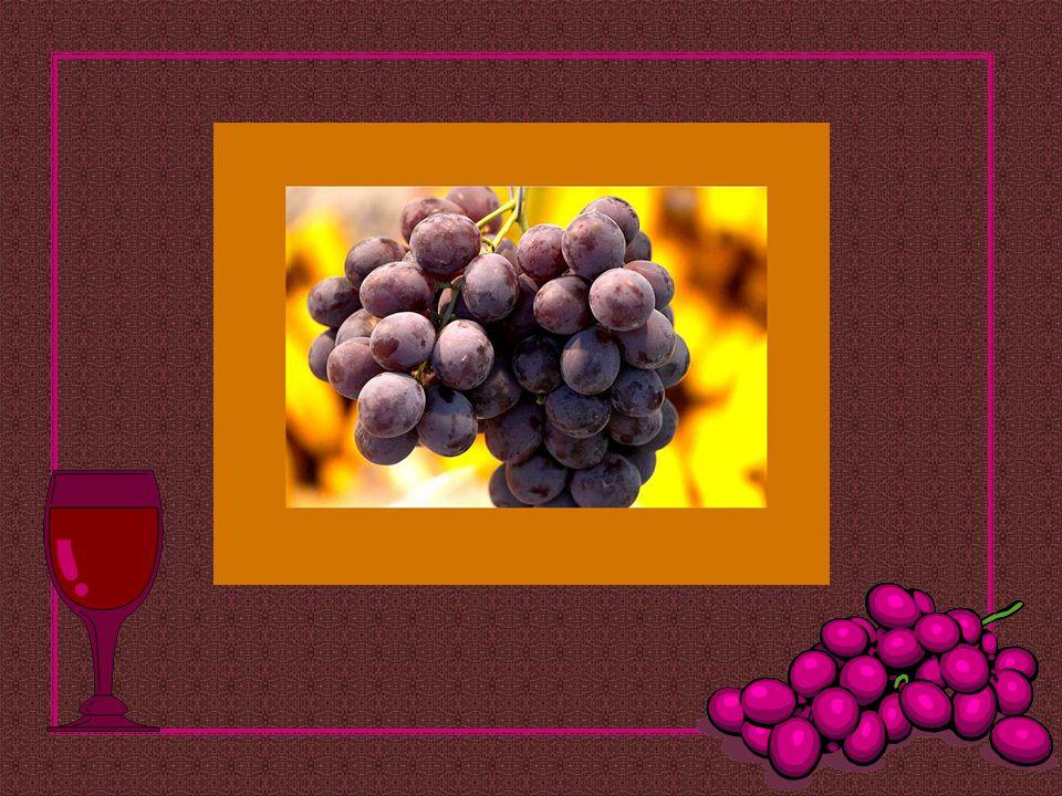 Deus não deseja que o bom vinho se perca. Por isso, não nos dá somente o vinhedo, mas também a devida sede... Winzerspruch de Dorlisheim