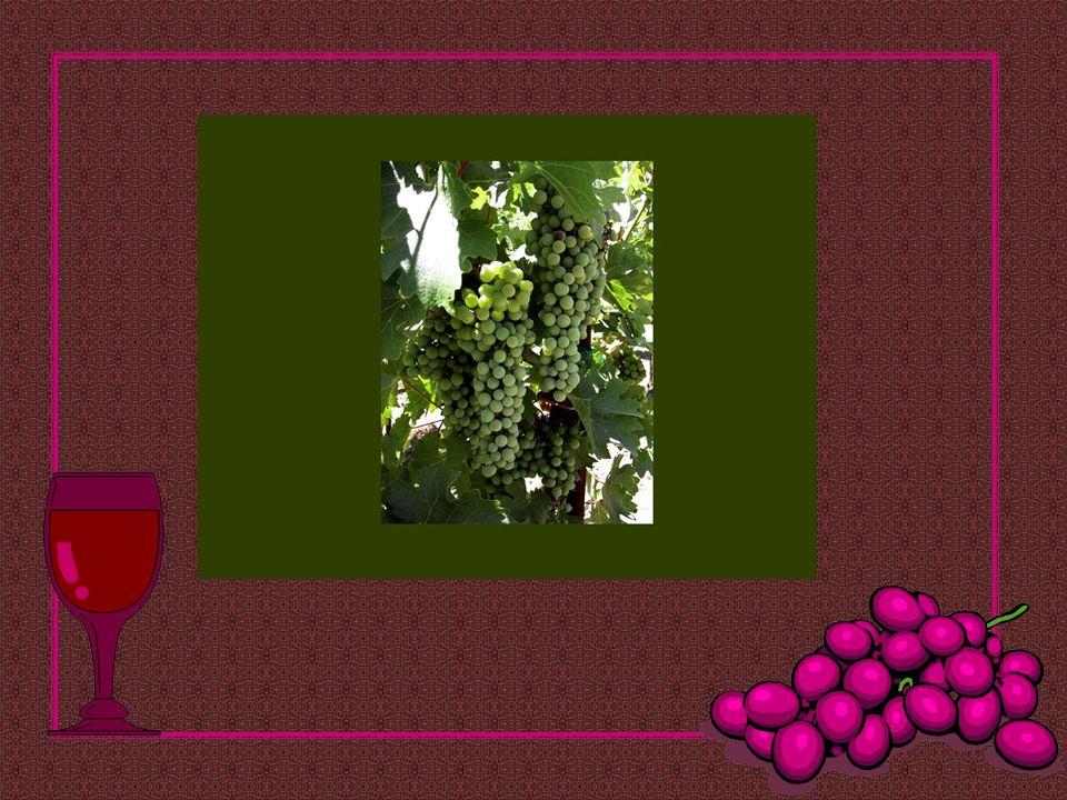 O vinho é inocente, só o bêbado é culpado!... Provérbio Russo