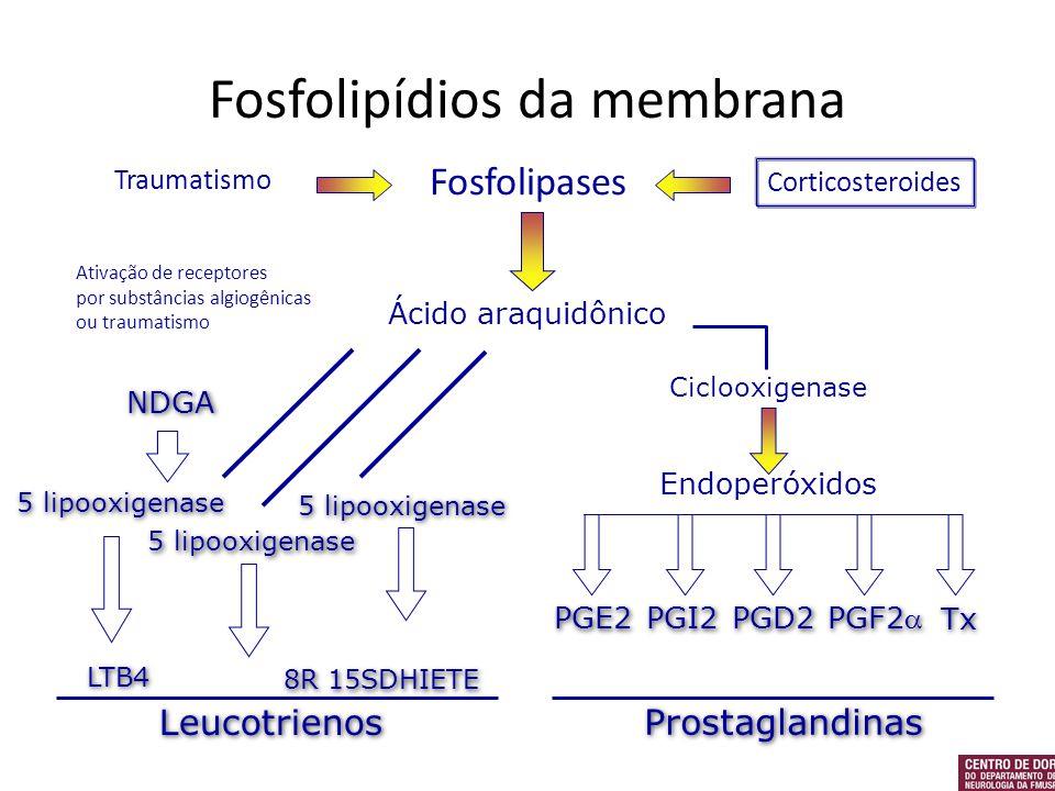 Ácido araquidônico Ciclooxigenase Endoperóxidos PGE2 PGI2 PGD2 PGF2 Tx NDGA 5 lipooxigenase LTB4 8R 15SDHIETE Leucotrienos Prostaglandinas Fosfolipase