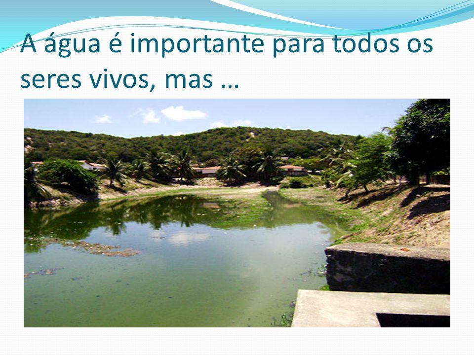 A água é importante para todos os seres vivos, mas …