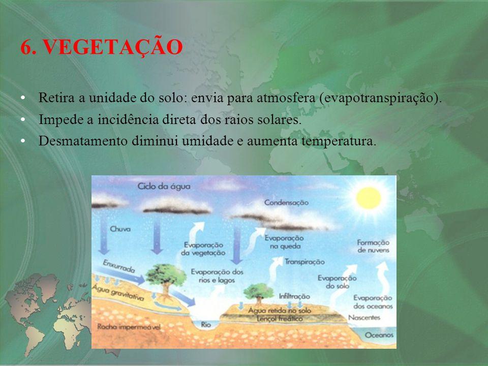 Retira a unidade do solo: envia para atmosfera (evapotranspiração). Impede a incidência direta dos raios solares. Desmatamento diminui umidade e aumen