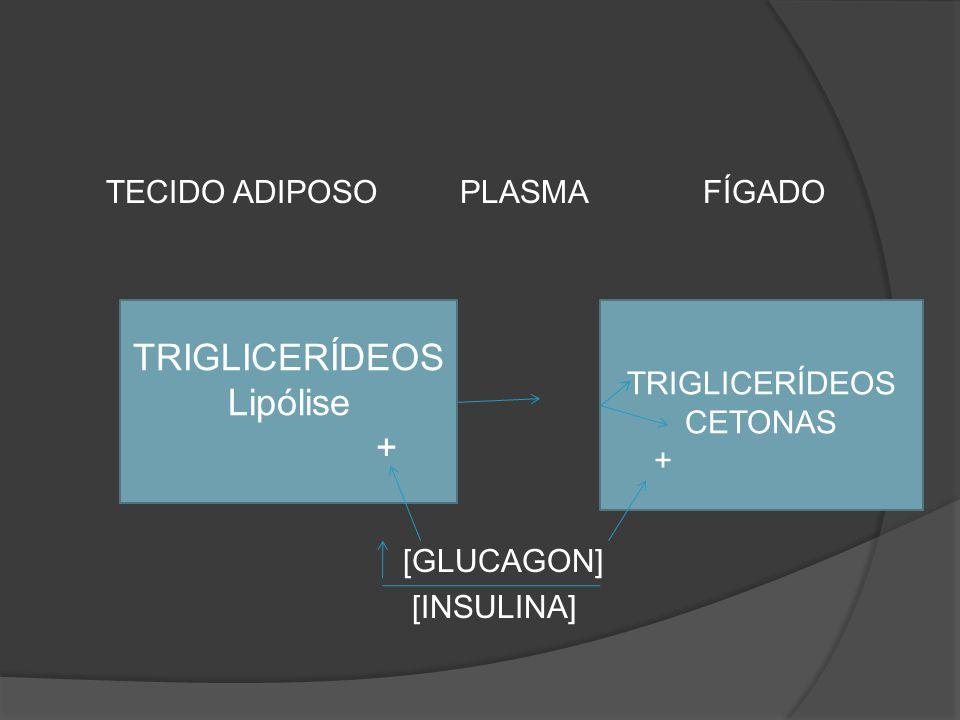 TECIDO ADIPOSO PLASMA FÍGADO [GLUCAGON] [INSULINA] TRIGLICERÍDEOS Lipólise + TRIGLICERÍDEOS CETONAS +