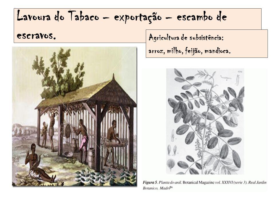 Lavoura do Tabaco – exportação – escambo de escravos. Agricultura de subsistência: arroz, milho, feijão, mandioca.
