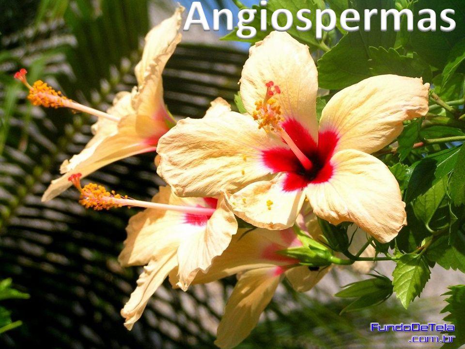 Flor Fruto