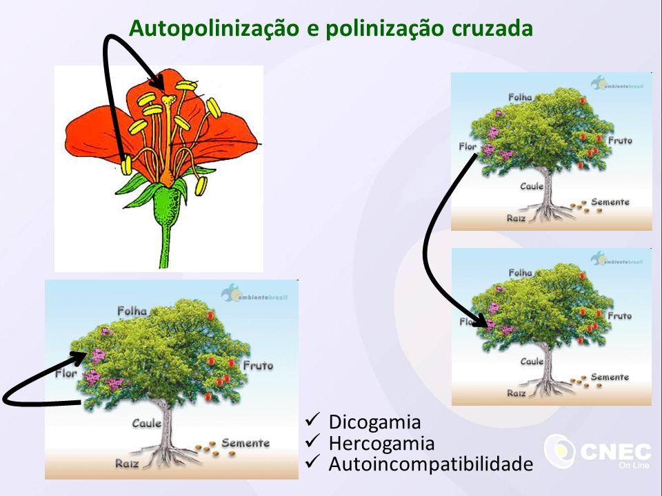 Autopolinização e polinização cruzada Dicogamia Hercogamia Autoincompatibilidade