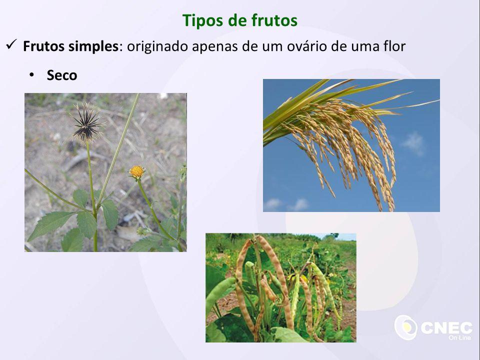 Tipos de frutos Frutos simples: originado apenas de um ovário de uma flor Seco