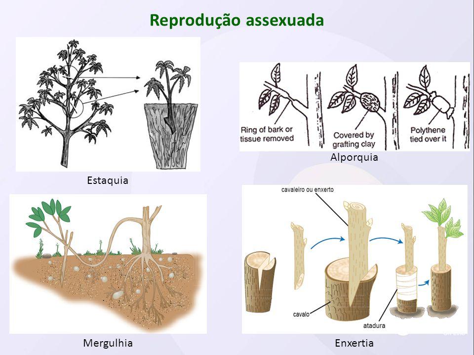 Reprodução assexuada Mergulhia Estaquia Enxertia Alporquia