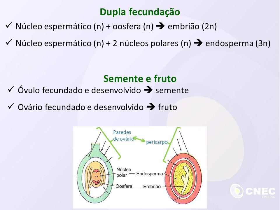 Dupla fecundação Núcleo espermático (n) + oosfera (n) embrião (2n) Núcleo espermático (n) + 2 núcleos polares (n) endosperma (3n) Semente e fruto Óvul