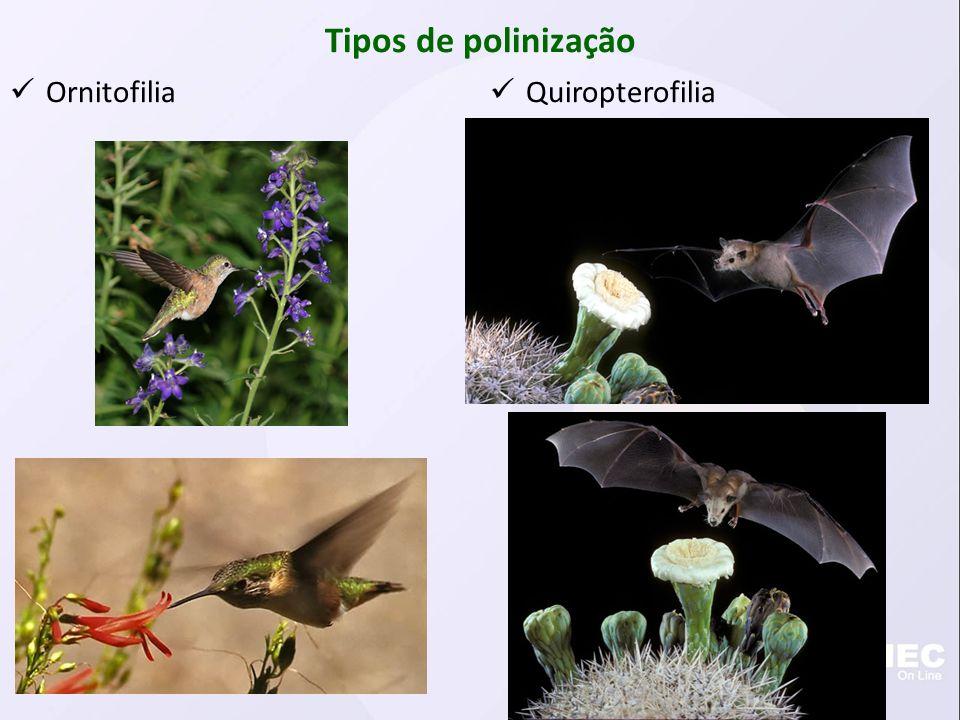 Tipos de polinização Ornitofilia Quiropterofilia