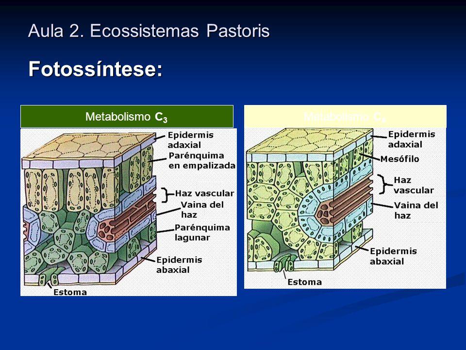 Aula 2. Ecossistemas Pastoris Fotossíntese: Metabolismo C 3 Metabolismo C 4