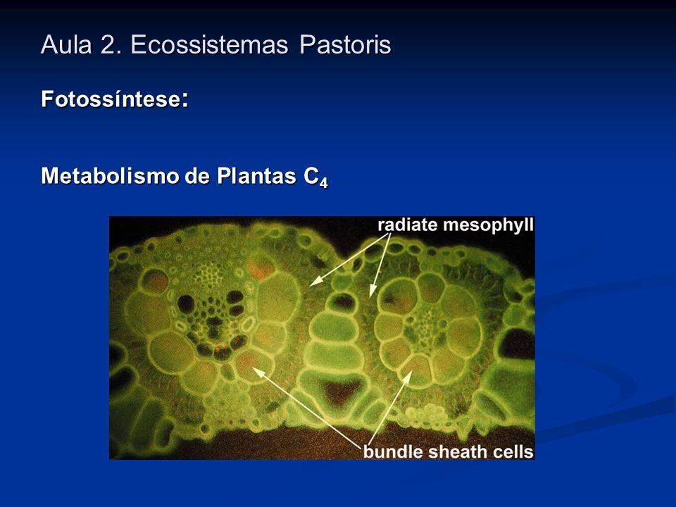Aula 2. Ecossistemas Pastoris Fotossíntese : Metabolismo de Plantas C 4