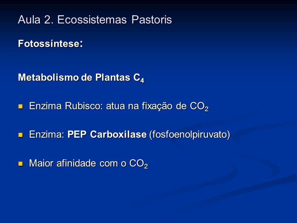 Aula 2. Ecossistemas Pastoris Fotossíntese : Metabolismo de Plantas C 4 Enzima Rubisco: atua na fixação de CO 2 Enzima Rubisco: atua na fixação de CO