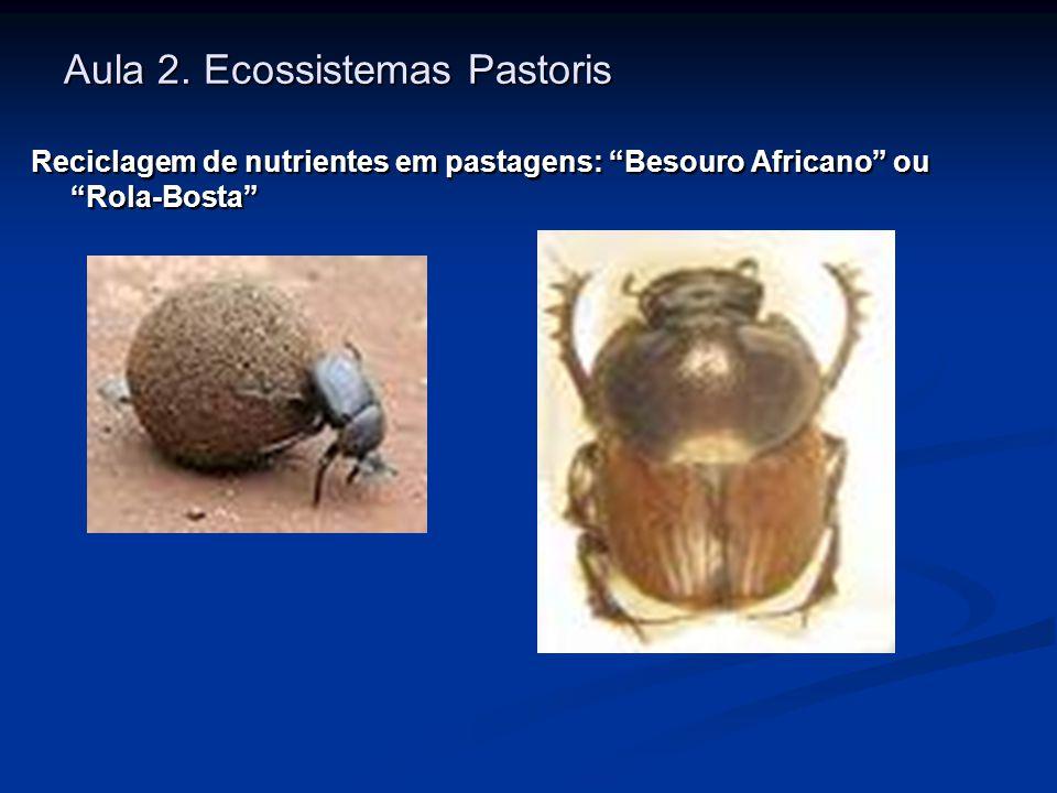 Aula 2. Ecossistemas Pastoris Reciclagem de nutrientes em pastagens: Besouro Africano ou Rola-Bosta