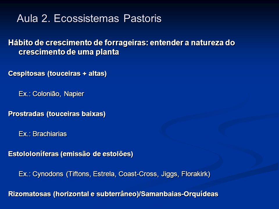 Aula 2. Ecossistemas Pastoris Hábito de crescimento de forrageiras: entender a natureza do crescimento de uma planta Cespitosas (touceiras + altas) Ex