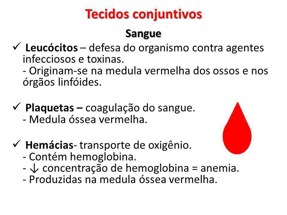 Sangue Leucócitos – defesa do organismo contra agentes infecciosos e toxinas. - Originam-se na medula vermelha dos ossos e nos órgãos linfóides. Plaqu