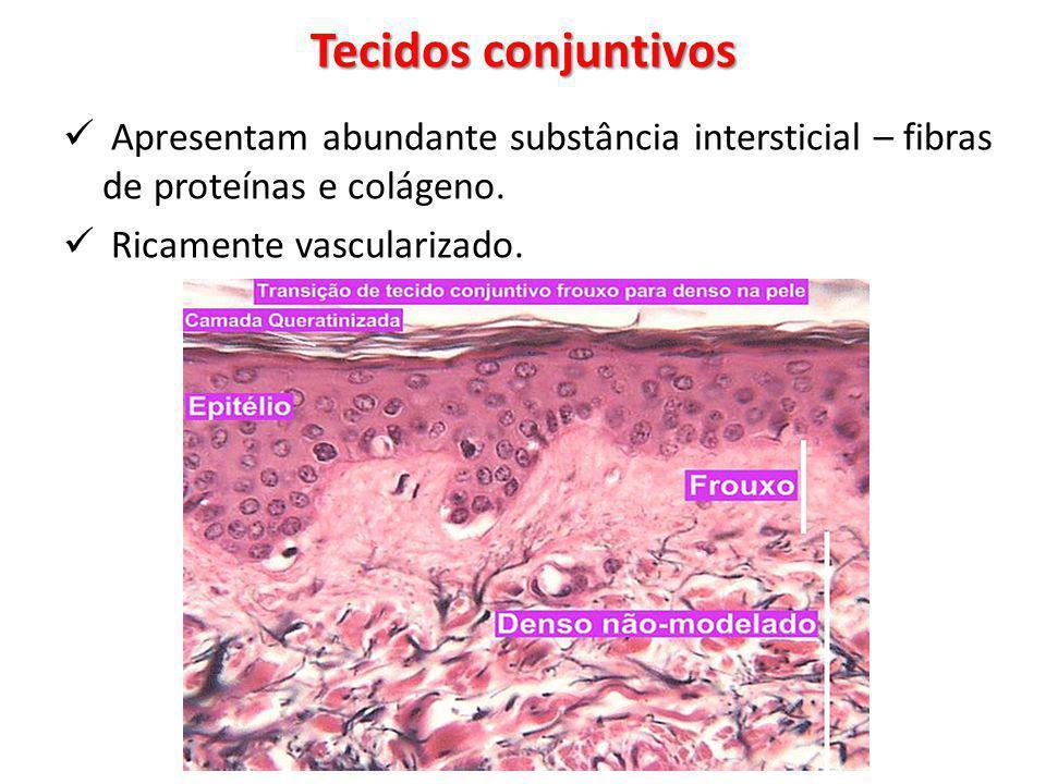 Tecidos conjuntivos Apresentam abundante substância intersticial – fibras de proteínas e colágeno. Ricamente vascularizado.