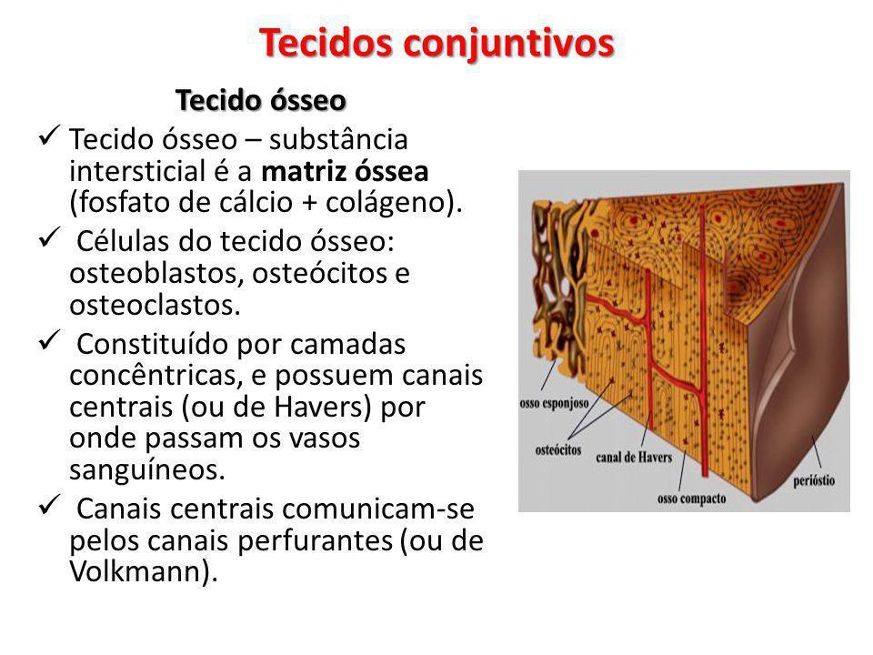 Tecido ósseo Tecido ósseo – substância intersticial é a matriz óssea (fosfato de cálcio + colágeno). Células do tecido ósseo: osteoblastos, osteócitos