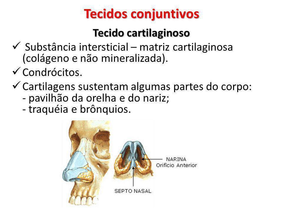 Tecido cartilaginoso Substância intersticial – matriz cartilaginosa (colágeno e não mineralizada). Condrócitos. Cartilagens sustentam algumas partes d