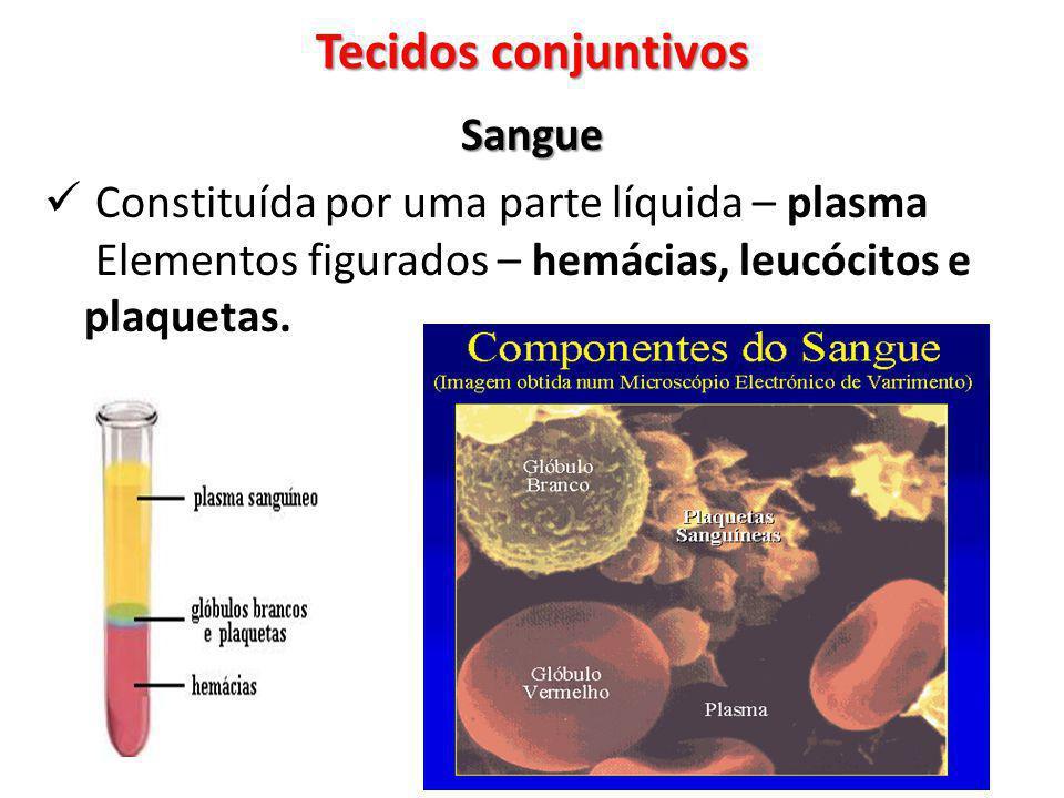 Sangue Constituída por uma parte líquida – plasma Elementos figurados – hemácias, leucócitos e plaquetas. Tecidos conjuntivos