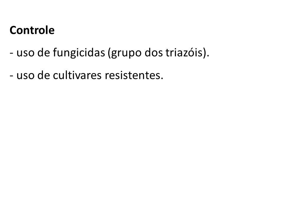 Controle - uso de fungicidas (grupo dos triazóis). - uso de cultivares resistentes.