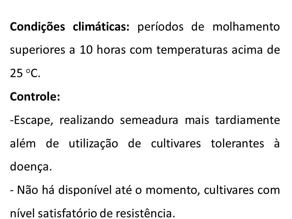 Condições climáticas: períodos de molhamento superiores a 10 horas com temperaturas acima de 25 o C. Controle: -Escape, realizando semeadura mais tard