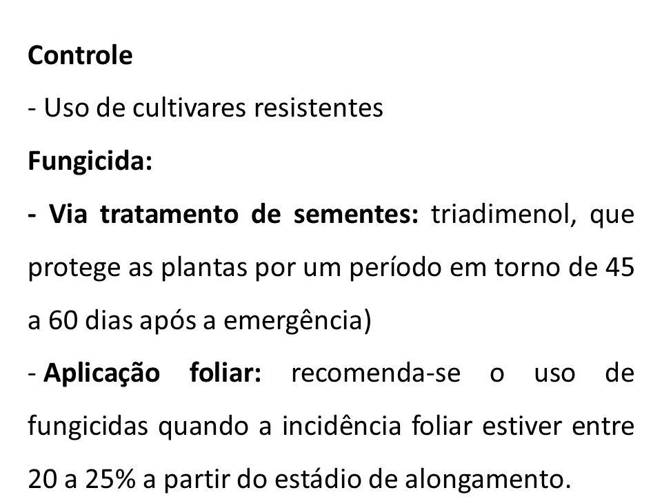 Controle - Uso de cultivares resistentes Fungicida: - Via tratamento de sementes: triadimenol, que protege as plantas por um período em torno de 45 a