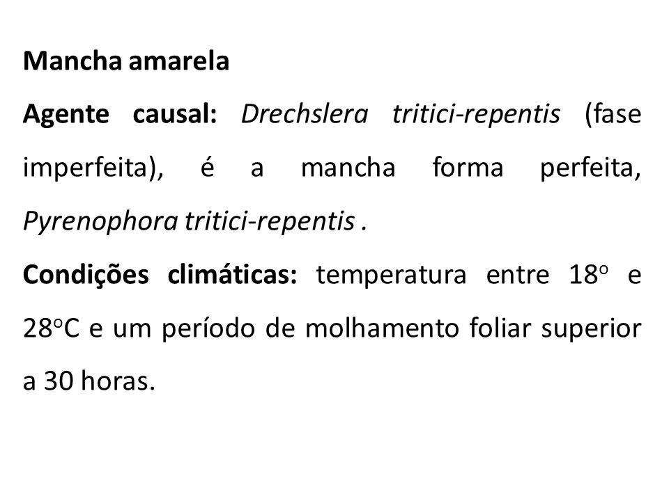 Mancha amarela Agente causal: Drechslera tritici-repentis (fase imperfeita), é a mancha forma perfeita, Pyrenophora tritici-repentis. Condições climát