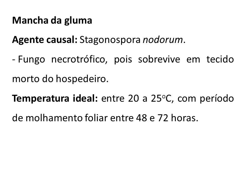 Mancha da gluma Agente causal: Stagonospora nodorum. - Fungo necrotrófico, pois sobrevive em tecido morto do hospedeiro. Temperatura ideal: entre 20 a