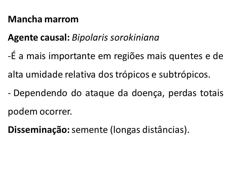 Mancha marrom Agente causal: Bipolaris sorokiniana -É a mais importante em regiões mais quentes e de alta umidade relativa dos trópicos e subtrópicos.