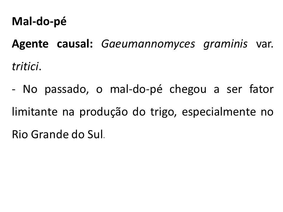Mal-do-pé Agente causal: Gaeumannomyces graminis var. tritici. - No passado, o mal-do-pé chegou a ser fator limitante na produção do trigo, especialme