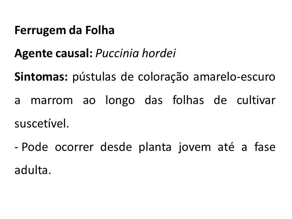 Ferrugem da Folha Agente causal: Puccinia hordei Sintomas: pústulas de coloração amarelo-escuro a marrom ao longo das folhas de cultivar suscetível. -