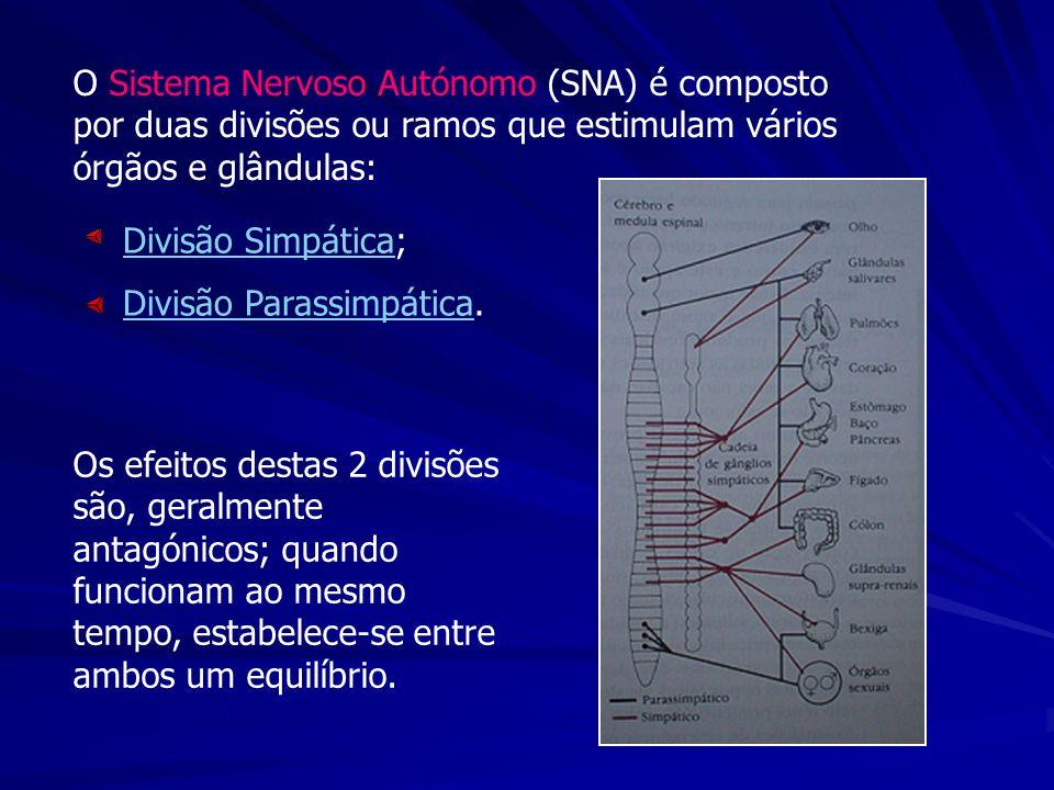 Os efeitos destas 2 divisões são, geralmente antagónicos; quando funcionam ao mesmo tempo, estabelece-se entre ambos um equilíbrio. O Sistema Nervoso