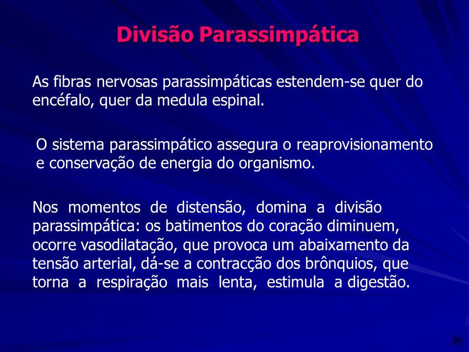 Divisão Parassimpática As fibras nervosas parassimpáticas estendem-se quer do encéfalo, quer da medula espinal. Nos momentos de distensão, domina a di