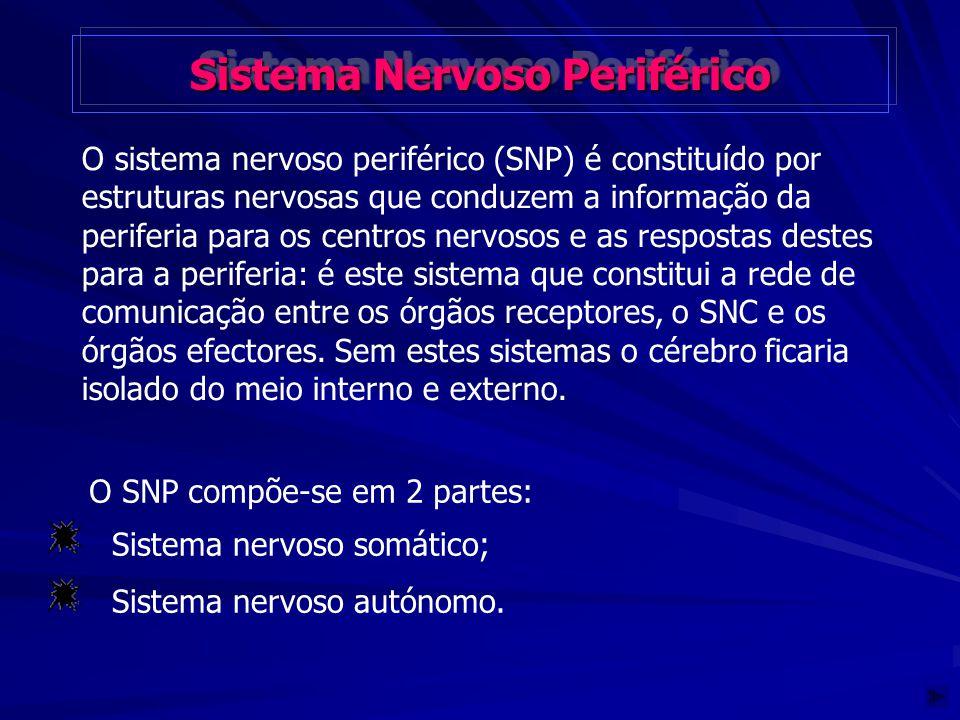 Sistema Nervoso Periférico Sistema Nervoso Periférico O sistema nervoso periférico (SNP) é constituído por estruturas nervosas que conduzem a informaç