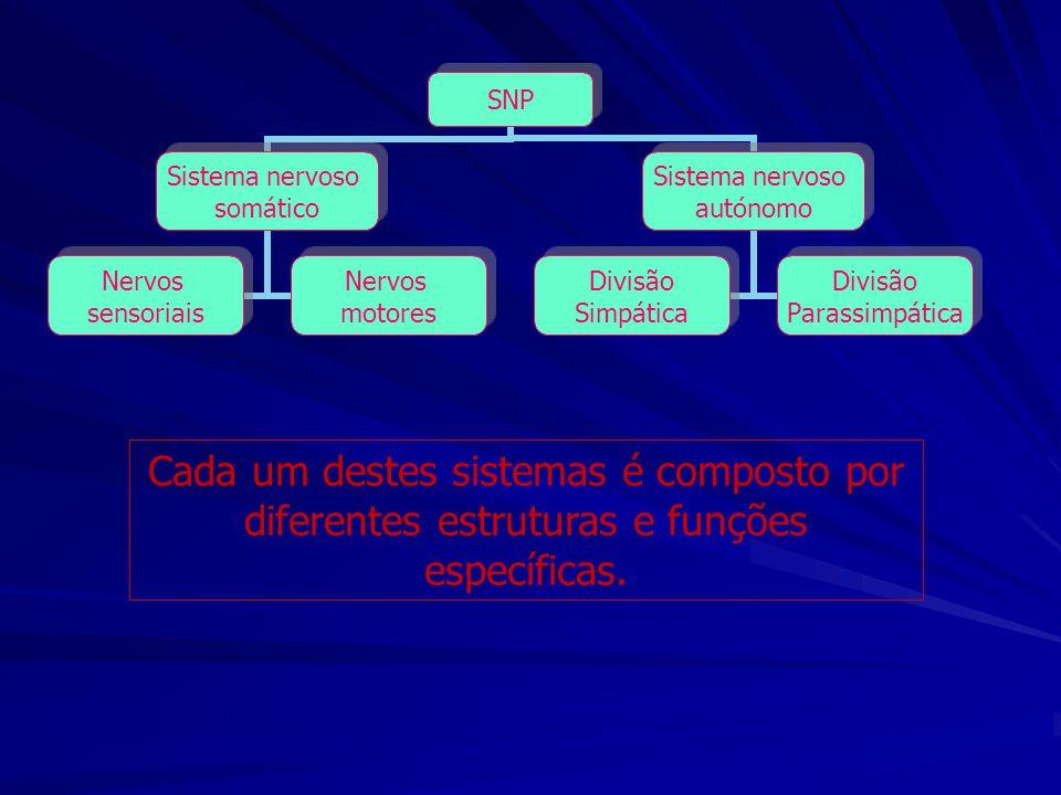 Cada um destes sistemas é composto por diferentes estruturas e funções específicas. SNP Sistema nervoso somático Nervos sensoriais Nervos motores Sist