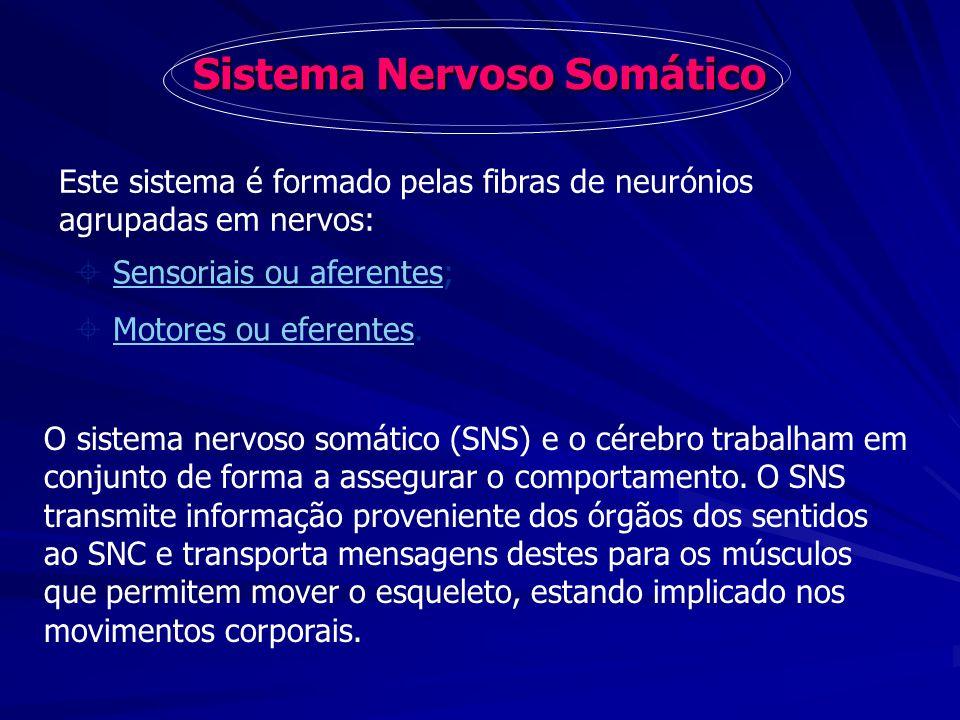 Sistema Nervoso Somático Este sistema é formado pelas fibras de neurónios agrupadas em nervos: Sensoriais ou aferentes;Sensoriais ou aferentes Motores
