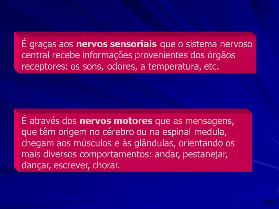 É graças aos nervos sensoriais que o sistema nervoso central recebe informações provenientes dos órgãos receptores: os sons, odores, a temperatura, et