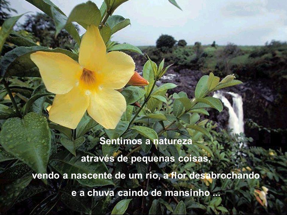 A natureza agora mudou de cor. Suas flores se destacam em beleza deslumbrante, É PRIMAVERA !
