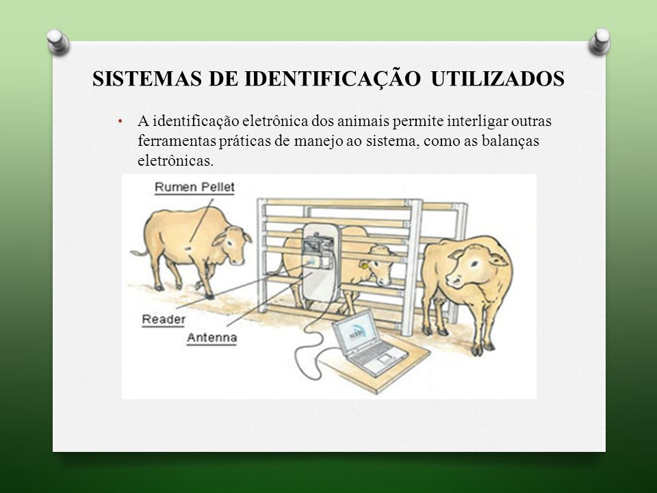 SISTEMAS DE IDENTIFICAÇÃO UTILIZADOS A identificação eletrônica dos animais permite interligar outras ferramentas práticas de manejo ao sistema, como as balanças eletrônicas.