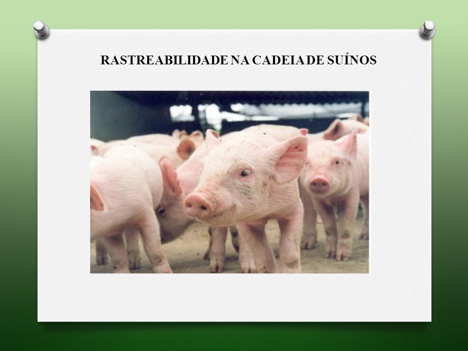 RASTREABILIDADE NA CADEIA DE SUÍNOS