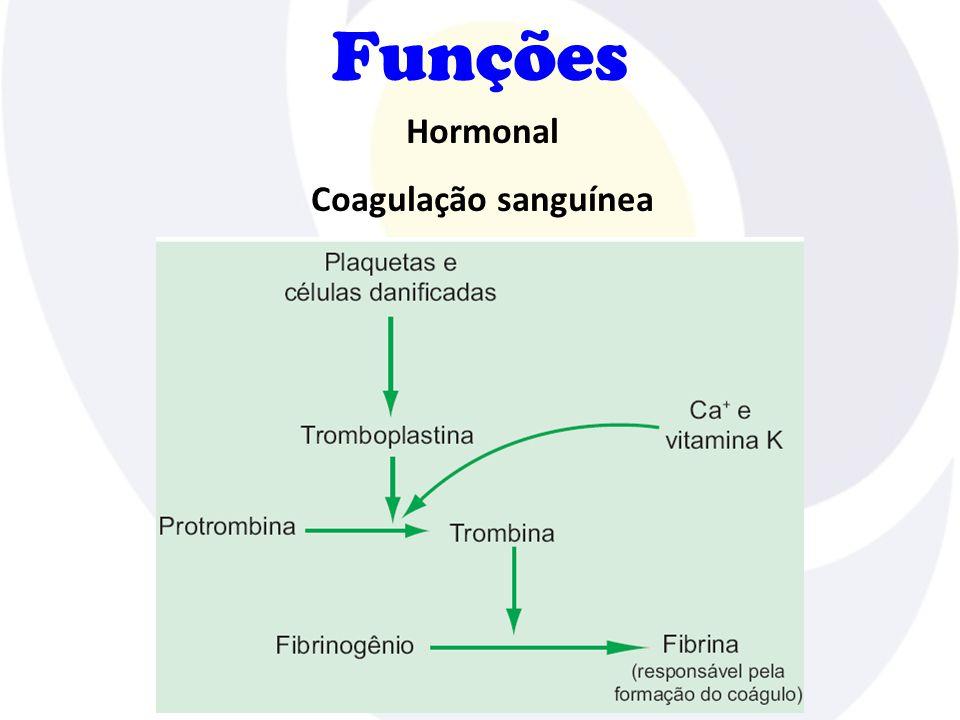 Funções Hormonal Coagulação sanguínea