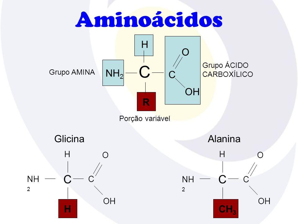 Aminoácidos H R Grupo AMINA Porção variável NH 2 C C O OH Grupo ÁCIDO CARBOXÍLICO H H NH 2 C C O OH Glicina H CH 3 NH 2 C C O OH Alanina