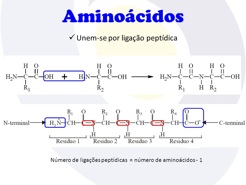 Estrutura das proteínas